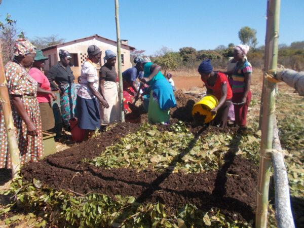 Farmer zimbabwe fertiliser