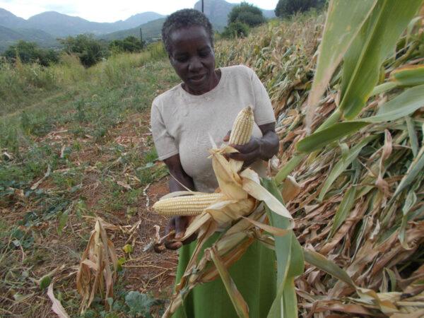 Feed family zimbabwe